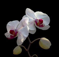 bellas orquideas - Buscar con Google