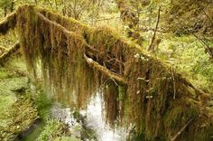 A beautiful hiking trail with trees covered in mosses | khmerkromonline.com