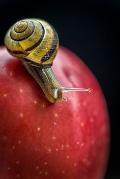 Snail by icypics