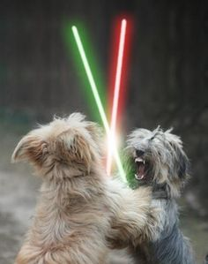 Animals with Lightsabers - Bing images