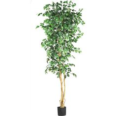 Enhance the natural appeal of any room and provide a sense of freshness with this decorative Silk Ficus tree. Its tropical appeal will add coziness to your interiors and bring you closer to Mother Nature. Its tall beauty is a great attraction.