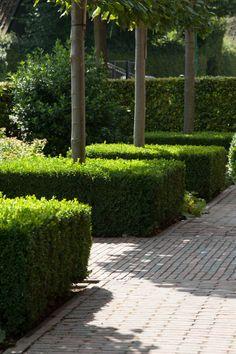 Classica-serie | Referentie sierbestrating in Rhenen Sidewalk, Plants, Side Walkway, Walkway, Plant, Walkways, Planets, Pavement