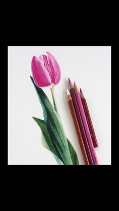 Learn how to draw this Tulip along with many other botanical art projects including flowers, fruits, and vegetables usin Pencil Drawings Of Flowers, Pencil Art Drawings, Colorful Drawings, Tulip Flower Drawing, Pencil Sketching, Realistic Drawings, Colour Pencil Shading, Blending Colored Pencils, Colored Pencil Artwork