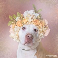 ERIN - Brookhaven Animal Shelter (LI) is available for adoption