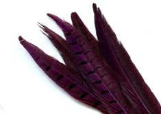 Purple Ring Neck Pheasant Tail Feathers. A Dark Colored Bird Quill with Dark Stripes. Long Narrow Decorations with Pointed Tips for Masks Ring Necked Pheasant, Purple Rings, Stone Pendants, Etsy Handmade, Jewelry Supplies, Beautiful Necklaces, Quilling, Feathers, Masks