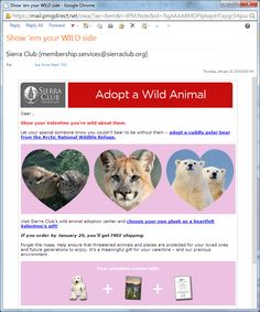 Sierra Club Valentine's gift catalog email message Sierra Club, E Cards, Non Profit, Fundraising, Valentine Gifts, Catalog, Electronic Cards, Gifts For Valentines Day, Brochures
