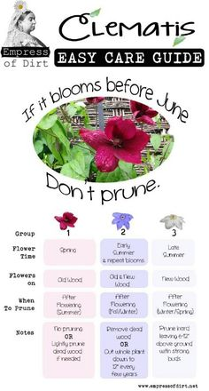 Easy care guide for Clematis. Thank you Aubrey, my gardener friend;)