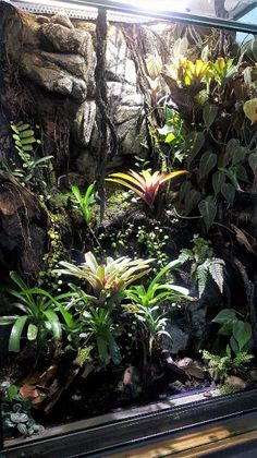 Terrarium für Dendrobaten - Terrarienpics - Vogelspinnenstammtisch Schweiz
