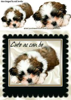AS CUTE AS CAN BE PUPPY IN A BLACK FRAME  on Craftsuprint - Add To Basket!