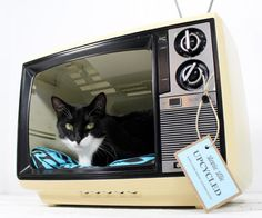 Television pet bed