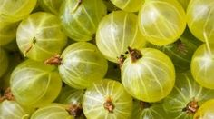 We are mad about berries - we like to grow them, we like to pick them up, prepare them and, of course, to eat them . How To Grow Gooseberries, Health And Beauty, Herbalism, Vegetables, Gardening, Plant, Garten, Vegetable Recipes, Lawn And Garden