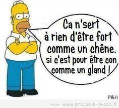 Voila qu est dit lol !!!... #simpson #lessimpsons #simpsons #con #chêne #chene #gland #glands #blague #rien