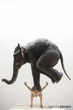 ✯ Pentateuque -2013- Artist Fabien Merelle ✯ Bizarre Photos, Vader, Latest Series, Faith In Humanity, Perception, Madrid, Steampunk, Elephant, Author