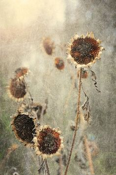 """~ """"When we look deep into the heart of a flower, we see clouds, sunshine, minerals, time, the earth and everything else in the cosmos in it.  Without clouds there could be no rain, and there would be no flower.""""  ~        Thich Nhat Hanh  ~ ~ ~"""