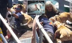 Dog owner mauled by pit bulls as he saved his Jack Russell terrier Pitbull Facts, Dog Shaming, Kinds Of Dogs, Jack Russell Terrier, Pit Bulls, Dog Owners, Dog Toys, Dog Breeds, Your Dog