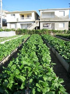 Havana, Cuba. Urban Agriculture