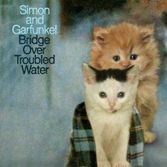 Simon and Garfunkel Kitten Cover