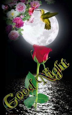 Good Night Images Cute, Good Night Love Messages, Good Night Hindi, Good Morning Beautiful Pictures, Romantic Good Night, I Love You Pictures, Cute Good Night, Good Night Greetings, Good Night Gif