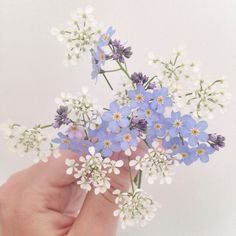 Discovered by Find images and videos about white, blue and aesthetic on We Heart It - the app to get lost in what you love. Flower Aesthetic, Purple Aesthetic, Wild Flowers, Beautiful Flowers, Collage Mural, All The Bright Places, Yennefer Of Vengerberg, Plants Are Friends, No Rain