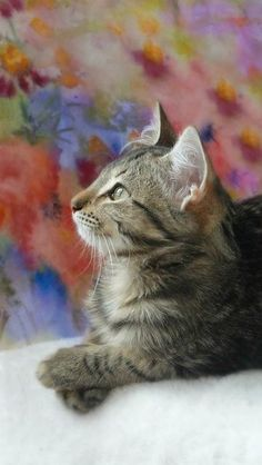 \The ideal of calm exists in a sitting cat.\ --Jules Reynard