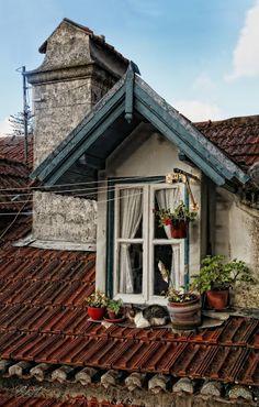 gatto sul tetto