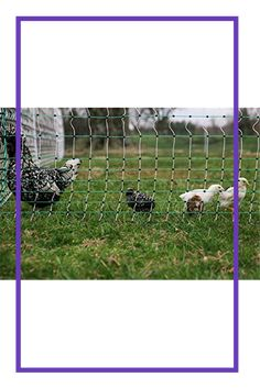 """Electric Fence Goat Net Sheep Poultry Chicken Pig Outdoor Fencing Large Cage 42/"""""""