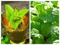 Natural Remedies, Cabbage, Vegetables, Nature, Diy, Medicine, Plant, Naturaleza, Bricolage
