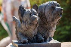 Princess Anne Celebrates the Skye Terrier Garden Sculpture, Lion Sculpture, Skye Terrier, Famous Dogs, Princess Anne, Westies, Heavenly, Dog Breeds, Pottery