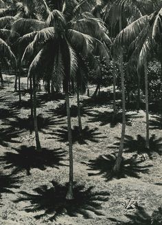 yesmaybe: Midday, in the shade of the coconut trees, Tahiti, 1938René Moreau