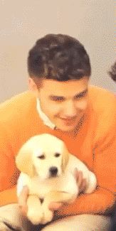 Wait....which one is the puppy? ;) {GIF}