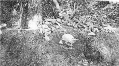 8 foot women and 9 foot men's skeletons discovered near Ohio's famous Serpent Mound