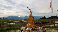 Walderalm Tirol Austria Tirol Austria, Mountain Pictures, Giraffe, Horses, Animals, Felt Giraffe, Animales, Animaux, Giraffes