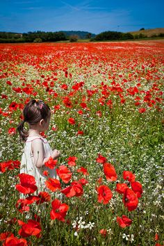 The Poppies run red , row after row in Flanders Field.
