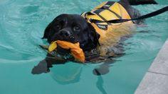 Dogswim - Lad os hjælpe din hund til en bedre livskvalitet