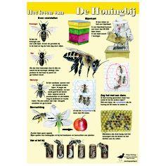 Poster Het leven van de honingbij, formaat 84cm x 60cm, geplastificeerd, http://iturl.nl/snqAyC