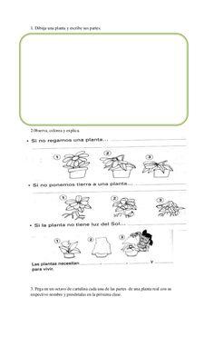 1. Dibuja una planta y escribe sus partes.2.0bserva, colorea y explica.3. Pega…
