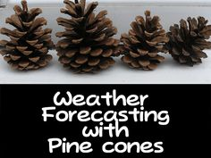 Pine Cone Weather Station