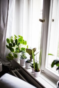 plants by the window.