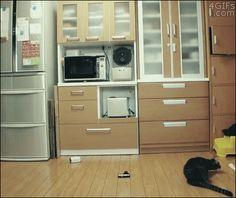 [오늘의 유머]  고양이 강아지 반응속도 #안전놀이터 #메이저리그 #메이저안전놀이터 #사설토토추천사이트