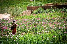 Young Poppy Farmer in Afghanistan 8x10 by TheOneJoePhotography. $40.00, via Etsy.