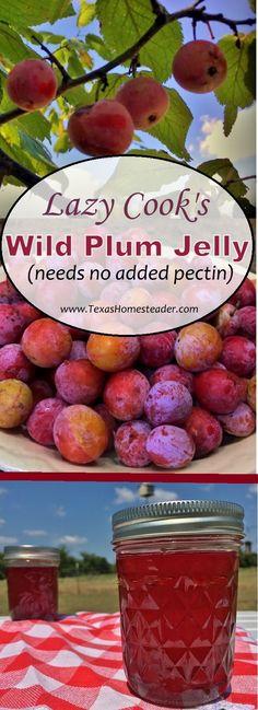 Plum Jam Recipes Easy, Wild Plum Jelly Recipe, Plum Jelly Recipes, Plum Jam With Pectin, Wild Plum Preserves Recipe, Canning Food Preservation, Preserving Food, Wild Plum Tree, Canning Recipes