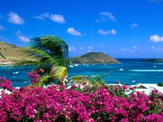 Beautiful, beach, martin, french, flowers.