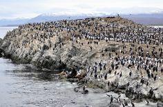 ushuaia,argentina, canal beagle, isla navarino