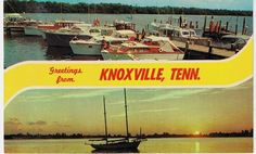 Greetings from Knoxville Tennessee! #season18, #antiques, #roadshow, #vintage, #postcard, #knoxville