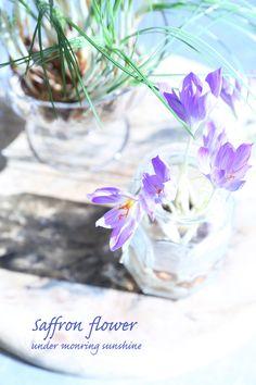 Saffron|Enjoy the Little Things