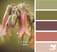 bloom tones via design seeds {soft autumn} Scheme Color, Colour Pallette, Color Palate, Colour Schemes, Color Combos, Color Patterns, Design Seeds, Cactus E Suculentas, Tuscan Design