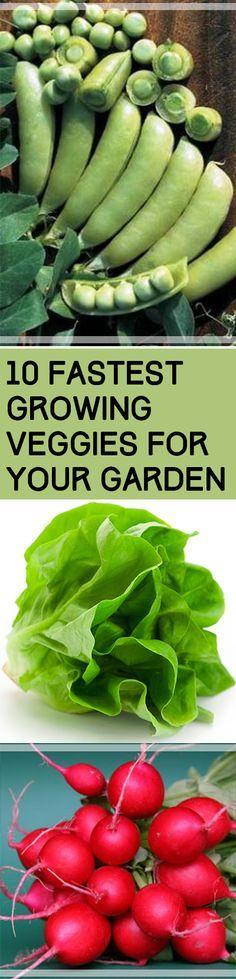 10 verduras de mayor crecimiento de su jardín