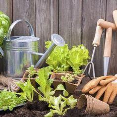 Como fazer fertilizante caseiro