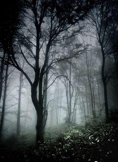 Something for forests. Vignetting + fog. Also dark darks and light lights…