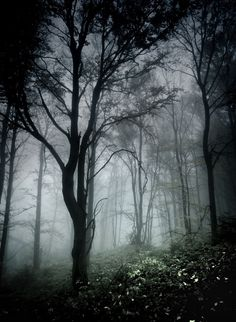 Something for forests. Vignetting + fog. Also dark darks and light lights. Mediums all greens and blues.